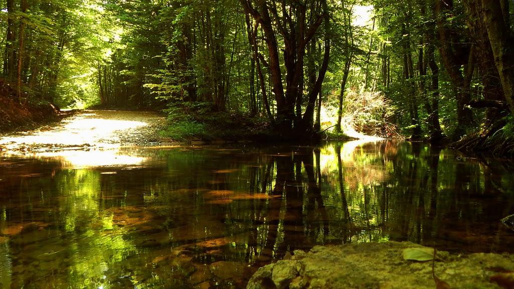 Резерват Тисовица Китен